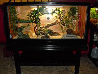 Gail's homemade Reptile enclosure and stand